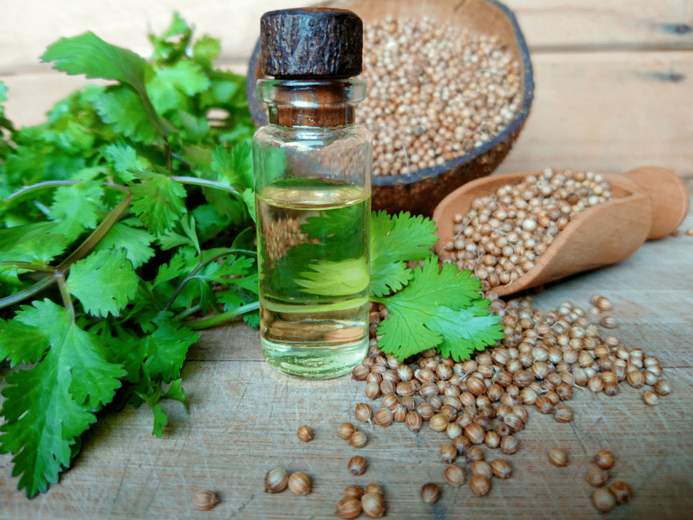 CORIANDER-HEALTHGREY-Remedies for sore throat
